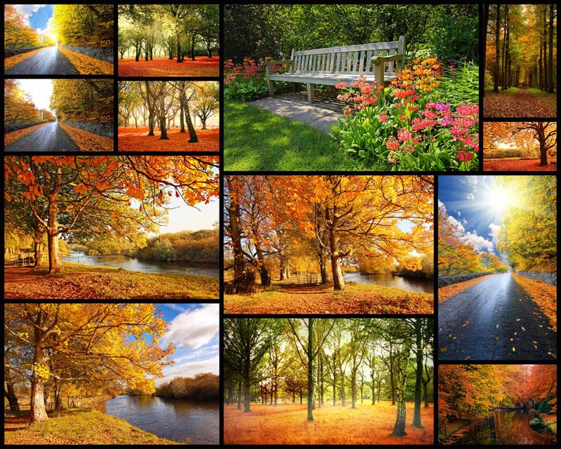 秋天的枫叶作文,儿童画秋天的图画枫叶,秋天的枫叶图片,秋天枫叶风景