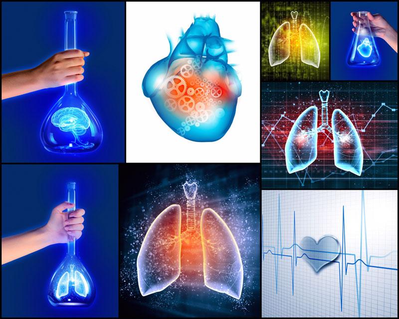 情侣红钻图标图片_人体内脏图案高清图片 - 爱图网设计图片素材下载