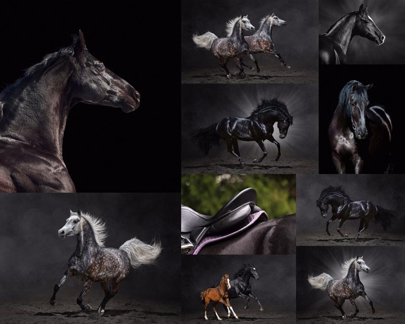 奔跑的马矢量素材 爱图网设计图片素材下载
