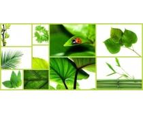 图片素材/高清绿色植物图片素材