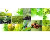 图片素材/绿色植物图片素材