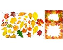 边框/漂亮的枫叶边框高清图片