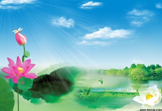 荷花蓝天风景图荷花蓝天白云白荷花绿草粉荷花树木河水房地产背景