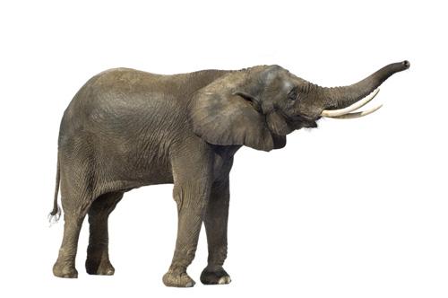 7张高清大象图片素材