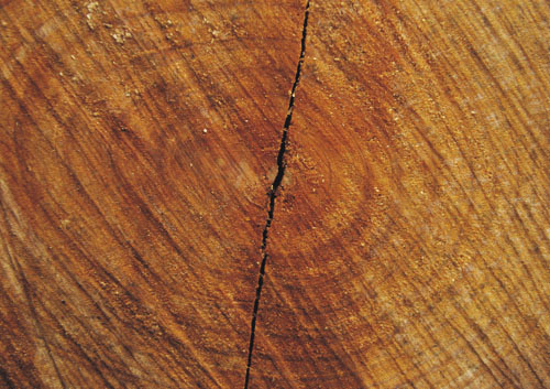 6张高清树木纹理图片素材