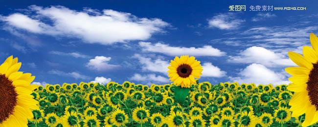向日葵背景图片素材 - 爱图网设计图片素材下载