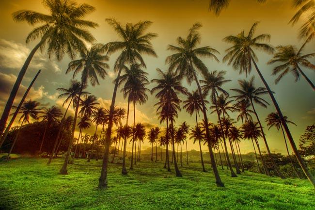 海南椰林风光高清竖图