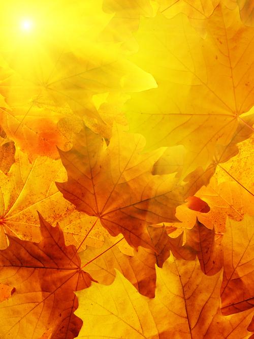 5张高清秋天树叶图片