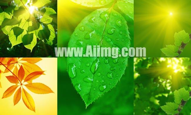 秋天枫叶风景摄影高清图片 爱图网设计图片素材