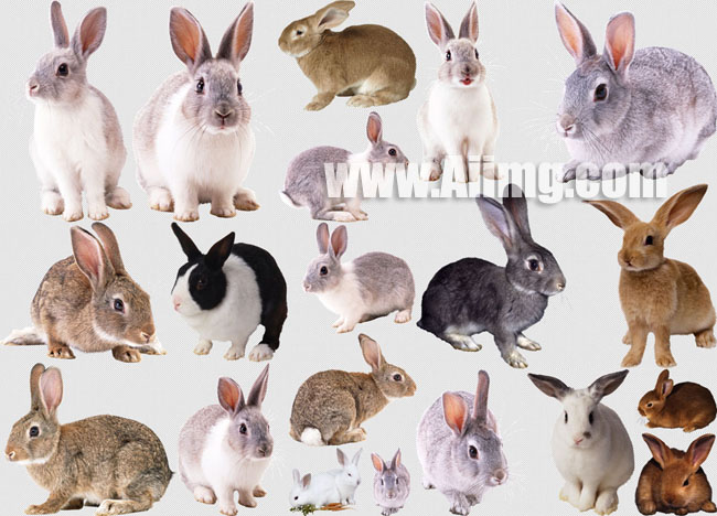 20张兔子图片素材