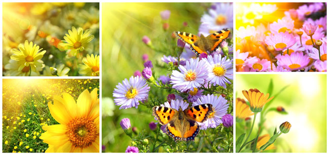 夏天花朵风景图片 - 爱图网设计图片素材下载