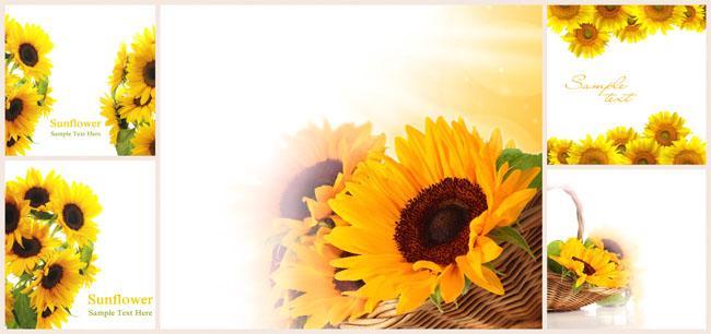 向日葵素材向日葵简笔画