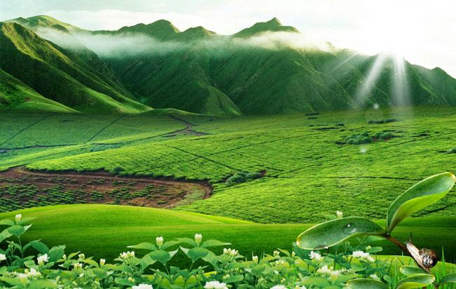 春天燕子风景psd素材 爱图网设计图片素材下载