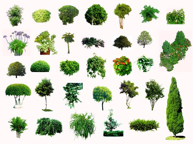 园林装饰树木psd分层素材